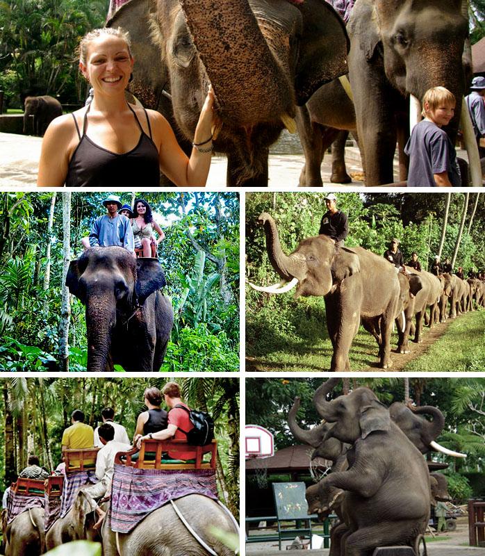Balade a dos d'elephant